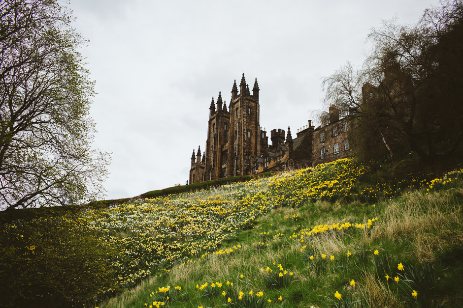 daffodils in Scotland castle